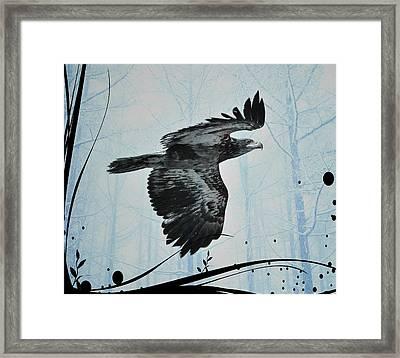 Young Bald Eagle Framed Print by Debra  Miller