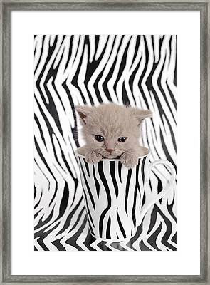 Zebra Cat Framed Print by Waldek Dabrowski