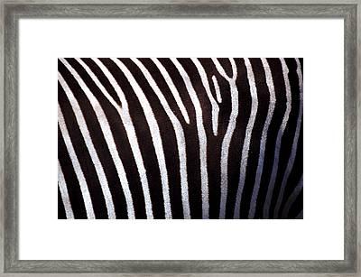 Zebra's Hide Framed Print