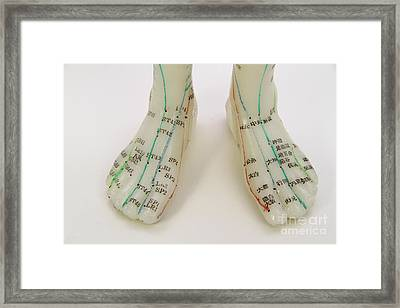 Acupuncture Model Framed Print