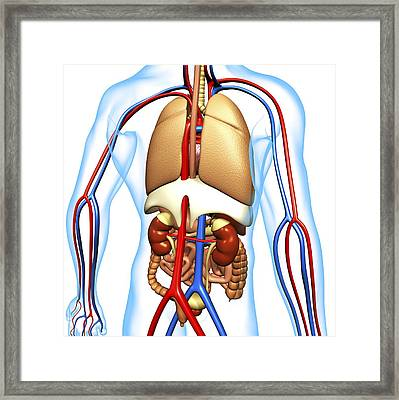 Human Anatomy, Artwork Framed Print by Pasieka