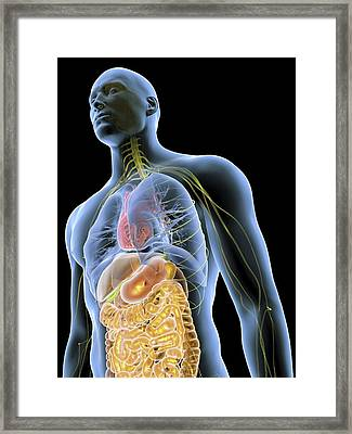 Human Male Anatomy, Artwork Framed Print by Pasieka