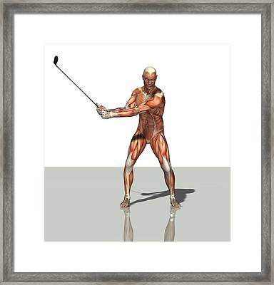 Male Muscles, Artwork Framed Print by Friedrich Saurer