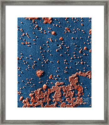 Polio Virus, Tem Framed Print by Omikron