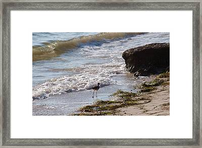 And I Think To Myself ...what A Wonderful World Framed Print by E Luiza Picciano