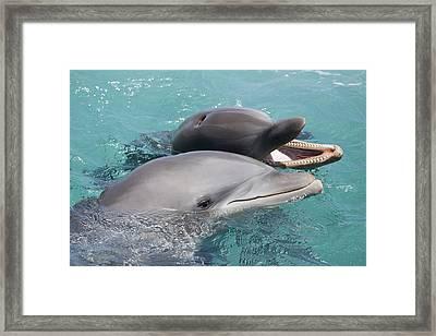 Atlantic Bottlenose Dolphins Framed Print by Dave Fleetham