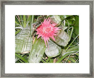 Framed Print featuring the photograph Flowers by Bogdan Floridana Oana