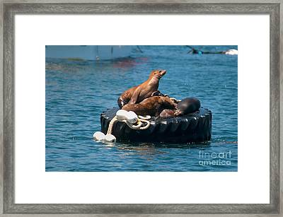Monterey Harbour Framed Print