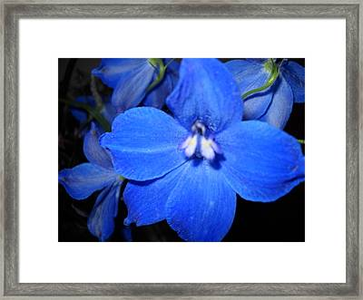 No Name Framed Print