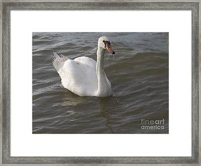 Swan Framed Print by Odon Czintos
