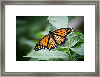 1205-8934 Monarch In Spring Framed Print by Randy Forrester