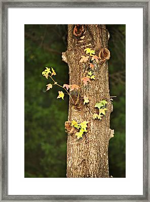 1209-0859 September Tease Framed Print by Randy Forrester