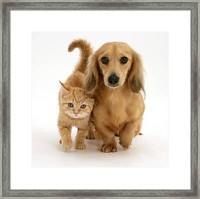 Kitten And Puppy Framed Print by Jane Burton