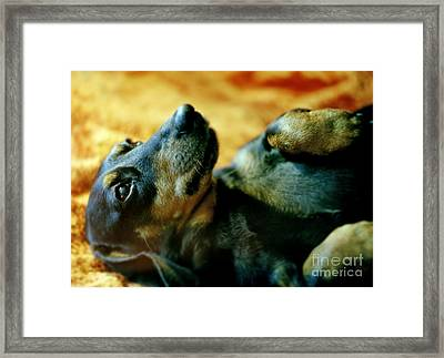 Lazy Afternoon Framed Print by Angel  Tarantella