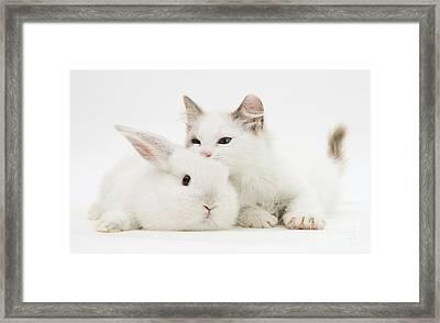 Rabbit And Kitten Framed Print
