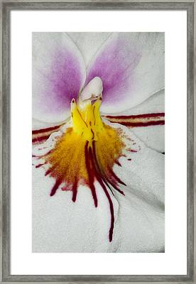 Exotic Orchid Flowers Of C Ribet Framed Print