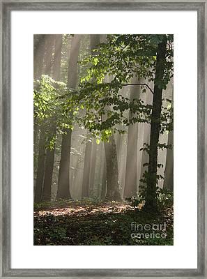 Forest Framed Print by Odon Czintos