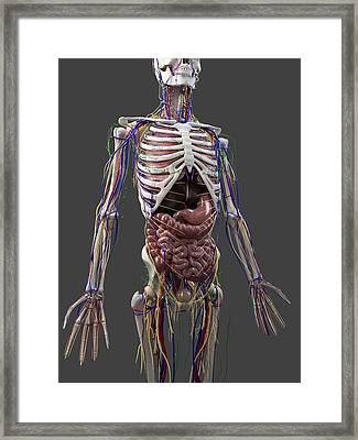 Human Anatomy, Artwork Framed Print by Sciepro