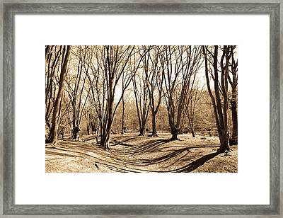Ambresbury Banks Bronze Age Fortification Framed Print by David Pyatt