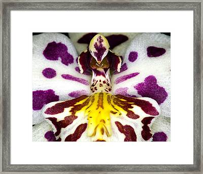 Exotic Orchid Flower Framed Print by C Ribet