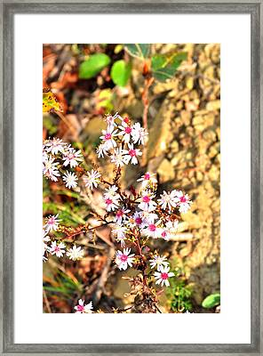 Framed Print featuring the photograph Flowers by Puzzles Shum