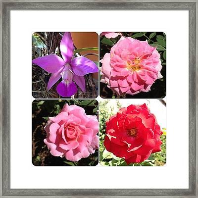 [15-iv-2k12] #flores #flowers Do Framed Print