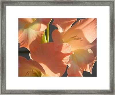 1506 Glad I Knowya Framed Print by Scott Bishop