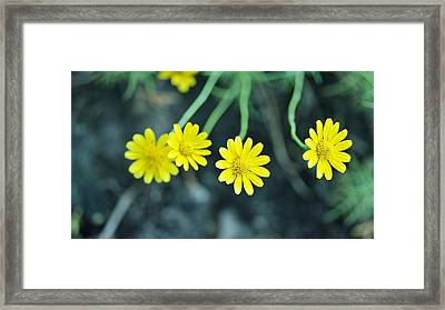 Flower Framed Print by Gornganogphatchara Kalapun