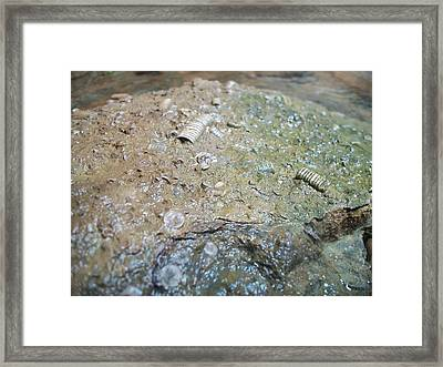 Untitled Framed Print by Samantha Capehart