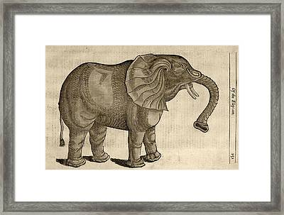 1607 Elephant By Topsell Age Toned Framed Print by Paul D Stewart