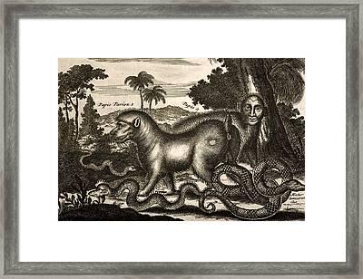 1673 Man Headed Bear Ape After Ogilby Framed Print by Paul D Stewart