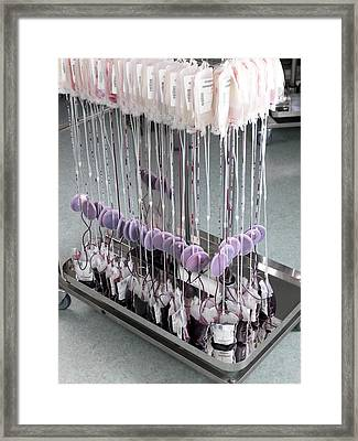 Donor Blood Processing Framed Print by Tek Image