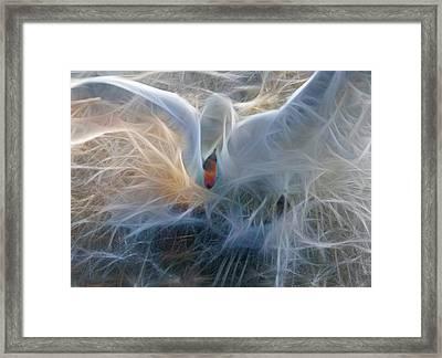 Untitled Framed Print by Zannie B