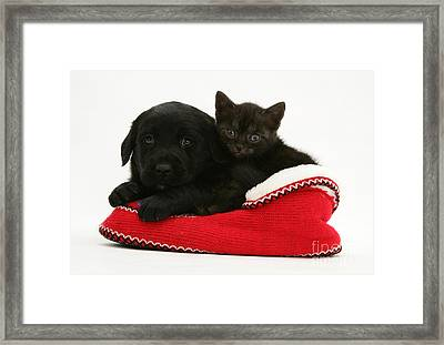 Kitten And Pup Framed Print by Jane Burton