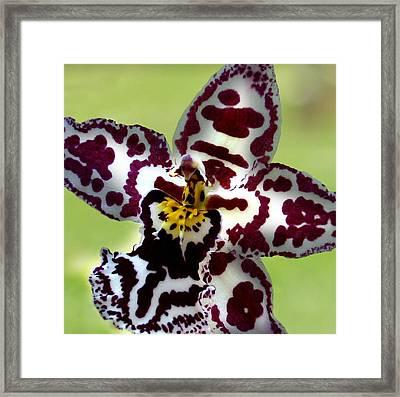 Orchid Flower Bloom Framed Print