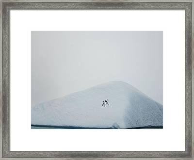 18 Penguins Sitting On Iceberg Framed Print