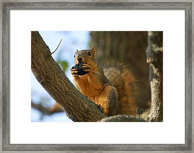Squirrel Framed Print by Lori Tordsen