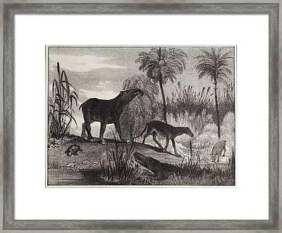 1837 Extinct Prehistoric Animals Paris Framed Print by Paul D Stewart