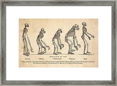 1863 Huxley From Ape To Man, Age-toned Framed Print by Paul D Stewart