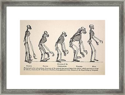 1863 Huxley From Ape To Man Evolution Framed Print by Paul D Stewart