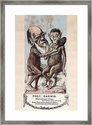 1874 Monkey Darwin Cartoon By Faustin Framed Print by Paul D Stewart