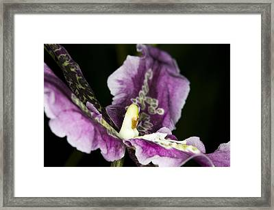 Framed Print featuring the photograph Exotic Orchid Flower by C Ribet
