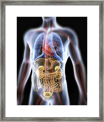 Human Anatomy, Artwork Framed Print