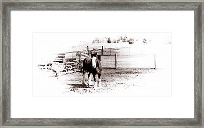 1900  Clydesdale Horse Framed Print by Marcin and Dawid Witukiewicz
