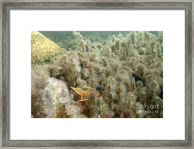 Algae In A Frozen Pond Framed Print by Ted Kinsman