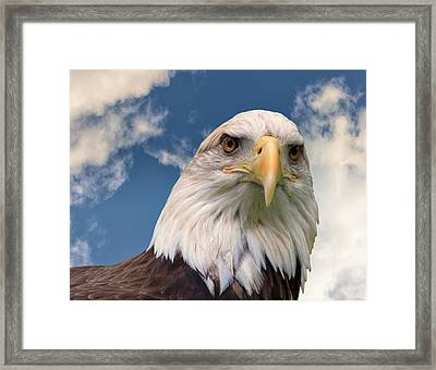 American Bald Eagle Framed Print by Ken Wolter