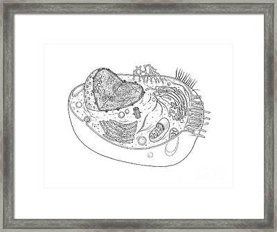 Animal Cell Diagram Framed Print