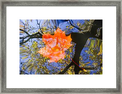 Autumn Leaf On The Water Framed Print by Michal Boubin