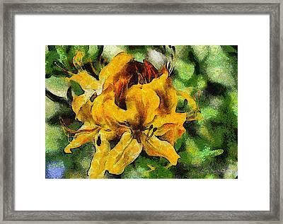 Azaleas In Bloom Framed Print