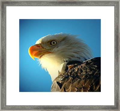 Bald Is Beautiful Framed Print by Carrie OBrien Sibley